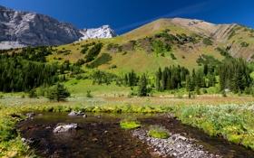 Обои зелень, трава, вода, деревья, пейзаж, горы, природа