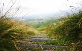 Картинка дорога, трава, макро, природа, путь, камни, обои