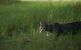 Обои охота, трава, кошка