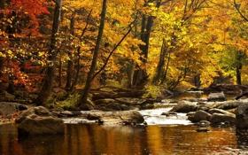Обои осень, вода, деревья, горы, природа, река, камни