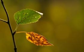 Обои листья, макро, ветка