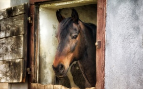 Обои фон, окно, конь