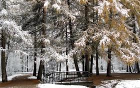 Картинка лес, деревья, природа, мостик, зима, снег, мост