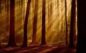 Картинка осень, листья, лучи, свет, деревья, природа, дерево