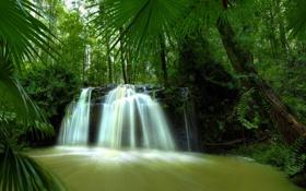 Обои лес, река, водопад, джунгли