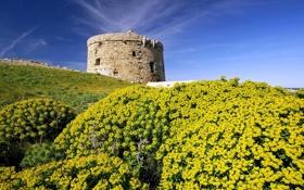 Картинка цветы, башня, холм, испания