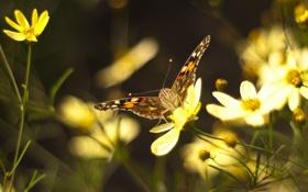 Обои усики, бабочка, лепестки, метелик, боке, цветок, мотылек