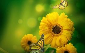 Обои желтые, зеленый фон, бабочки, блики, цветы