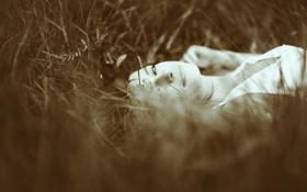 Обои поле, трава, взгляд, девушка, лицо, улыбка, настроение