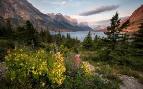 Картинка лес, горы, природа, озеро, Glacier National Park, Montana