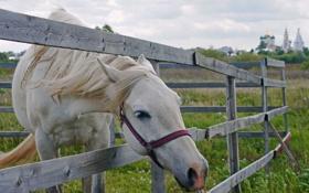 Обои конь, красота, лето