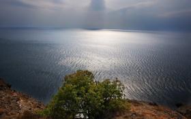 Обои волны, горы, дерево, горизонт, Черное, Крым