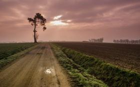 Картинка дорога, тучи, поля, дерево
