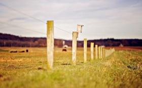 Обои зелень, трава, природа, фон, обои, забор, размытие