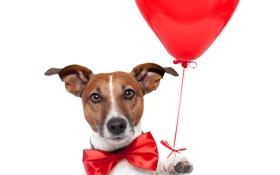 Обои red, heart, dog, balloon