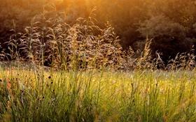 Картинка трава, природа, роса, утро