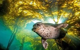 Обои вода, природа, тюлень