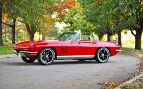 Обои красный, ретро, 1969, red, corvette, кабриолет, классика