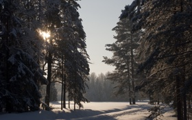 Обои зима, солнце, снег, павловск