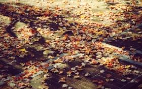 Обои осень, листья, листва, Город, Улица, тротуар, листики