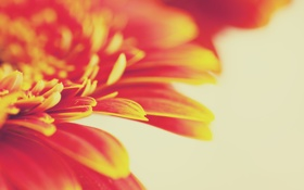Картинка макро, цветы, фото, лепестки, обои для рабочего стола