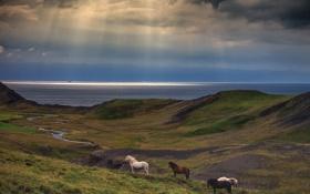 Картинка море, небо, лучи, холмы, кони, лошади