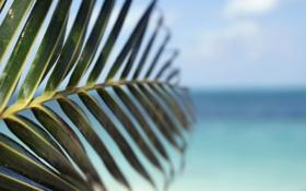 Обои море, небо, макро, лист, куст
