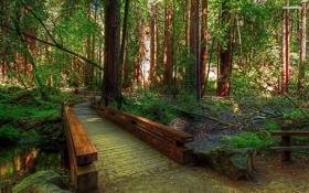 Картинка лес, деревья, мост, природа, река, камни, фото