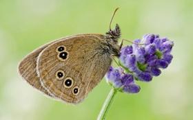 Обои цветок, бабочка, растение, крылья, насекомое, мотылек