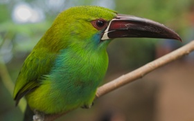Картинка природа, птица, перья, клюв