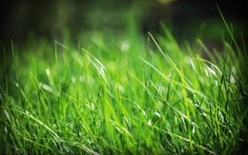 Обои zim2687, grassss, трава