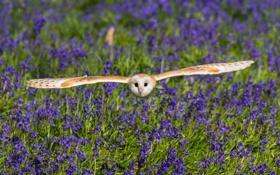 Обои цветы, сова, птица, крылья, луг, полёт, колокольчики