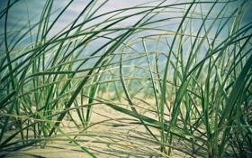 Картинка песок, трава, макро, природа, ростки, nature, macro