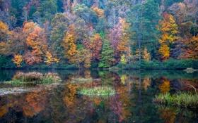Картинка осень, лес, деревья, озеро, отражение, США, Алабама