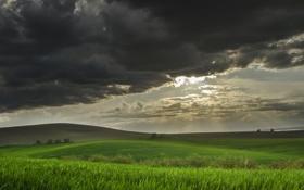 Картинка поле, холмы, пшеничное, приближение бури