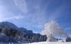 Обои зима, иней, небо, снег, деревья, горы