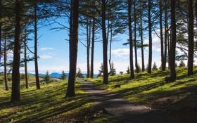 Картинка зелень, лес, лето, трава, деревья, парк