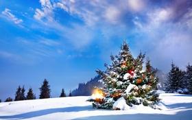 Обои лед, небо, свет, снег, lights, елка, Новый год