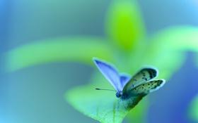 Обои листья, насекомое, растение, макро, бабочка