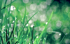 Обои капли, трава, блики, макро, роса