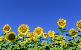 Обои природа, красота, Цветочки