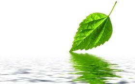 Обои вода, капли, лист, зеленый, отражение
