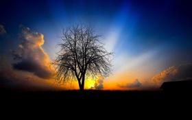 Обои закат, черный фон, Пейзажи, дерво