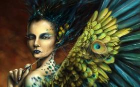Картинка девушка, перо, крылья, перья, фэнтези, арт, павлина