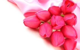 Обои цветы, тюльпаны, бутоны