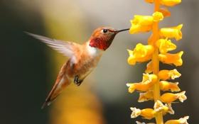 Обои цветок, макро, птица, клюв, колибри