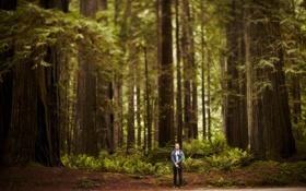Картинка природа, лес, деревья, человек