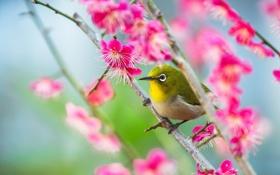 Обои природа, птица, макро