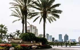 Обои город, пальма, голубой, здание, небоскреб, Флорида, USA