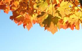 Картинка осень, небо, листья, свет, природа, light, sky